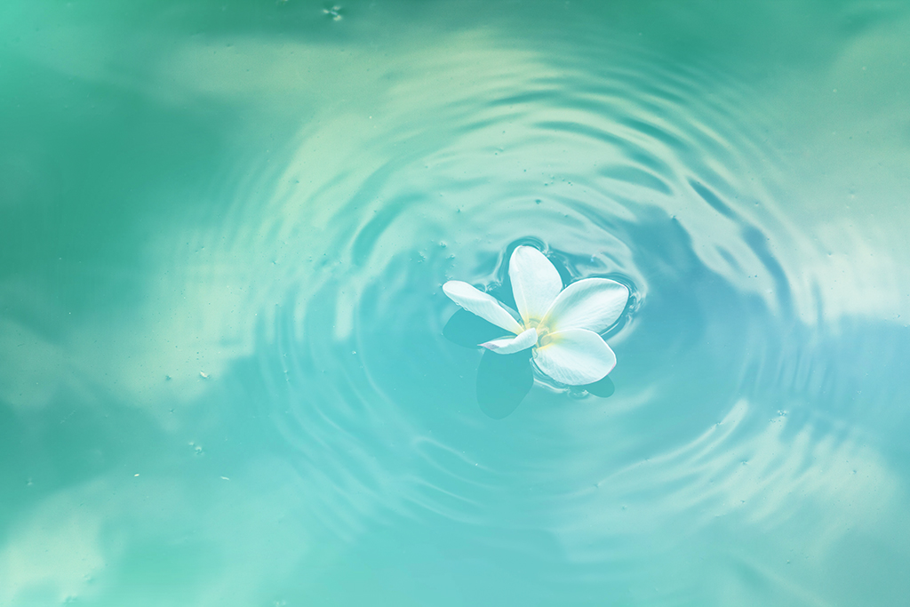 Flower floating on water symbol of post-mastectomy aqua-therapy care